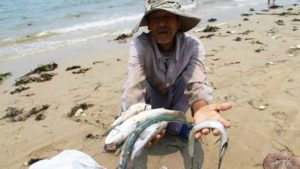160423085334_vn_dead_fish_640x360_getty_nocredit